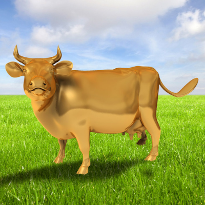 Un estudio afirma que la orina de vaca contiene oro